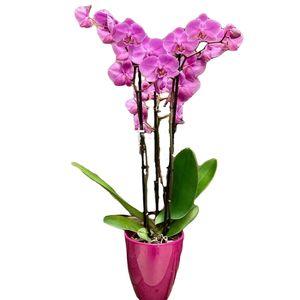 Orquídea tres varas