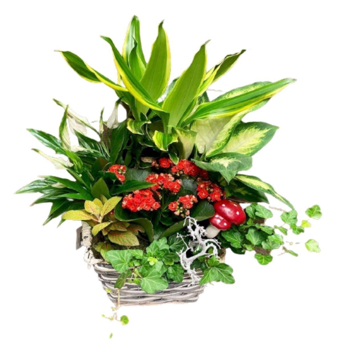Centro/Cesta de plantas pequeña